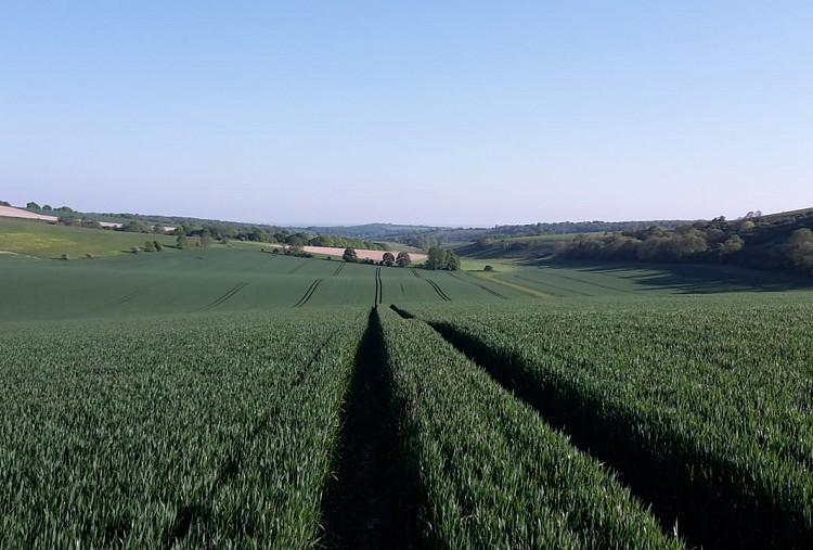 Almost half of the UK's arable land is now looked after by an independent agronomist, with that area expected to increase as Brexit takes shape and new agricultural policy is introduced.